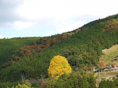 南紀滝・温泉紀行? 熊野街道の紅葉