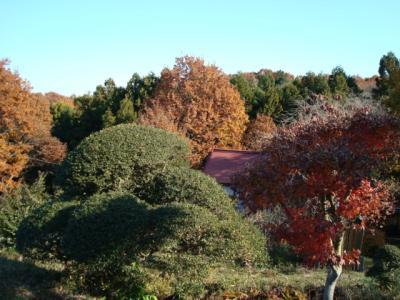 里山ではまだ紅葉が