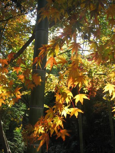 紅葉求めて川越散策その3:喜多院で紅葉狩り