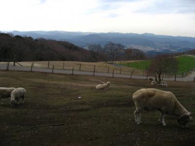 お正月休みはマザー牧場へ