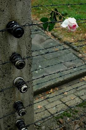 ★ポーランド旅(6)アウシュヴィッツの薔薇・ビルケナウの薔薇