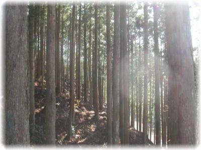 一瞬の熊野古道