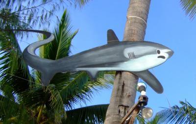 フィリピン・マラパスカ島-1 ニタリザメに逢いに行こう!