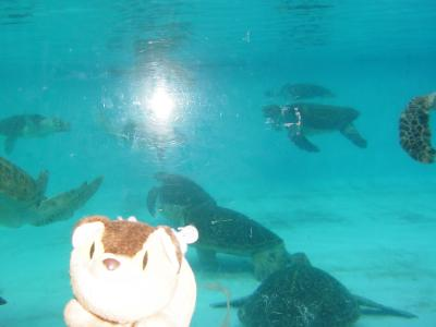 2008年1月沖縄旅行?「ウミガメがしゃべった!じんべえと会った日」