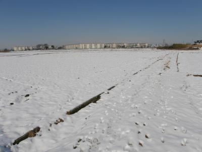 今年初めて積もった自宅周辺の雪景色
