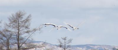 極寒の道東:流氷、御神渡り、タンチョウ、パウダースノー満喫