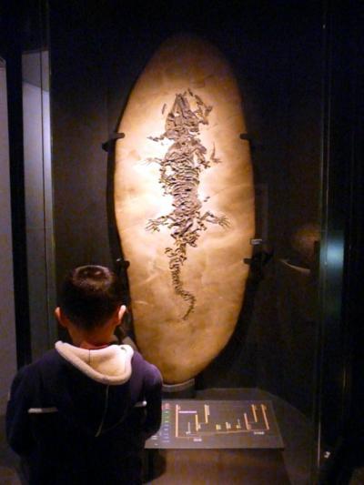 3.アンコールナスカ展 国立科学博物館 地球館B2F 上野グリーンサロンの昼食