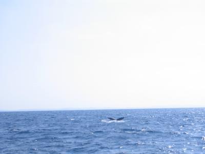 クジラに会いに!