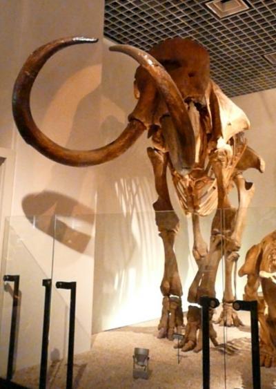 4.国立科学博物館 地球館 B2F 恐竜の謎を探る その1