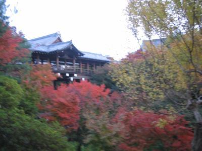 東福寺~紅葉~