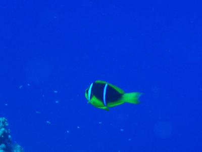 ロタ島 ダイビングの旅