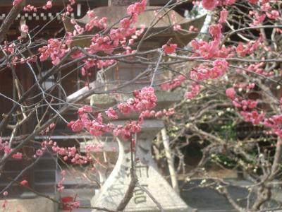 北野天満宮の春は早い。