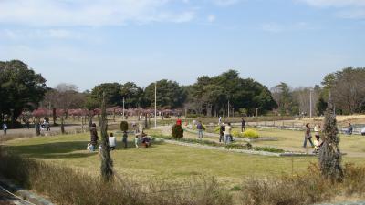 服部緑地公園の梅林