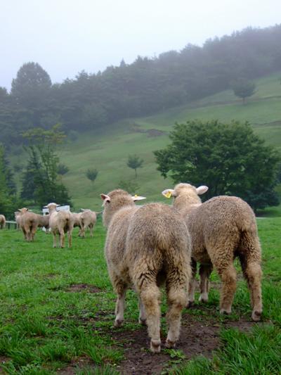 牧羊犬はチョー賢い。迫力のシープドッグショウ(SHEEP DOG SHOW) 伊香保グリーン牧場 /群馬県渋川市 金井