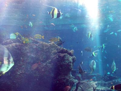 ♪沖縄で結婚式&プチハネムーン-その2~美ら海水族館~エメラルドビーチ