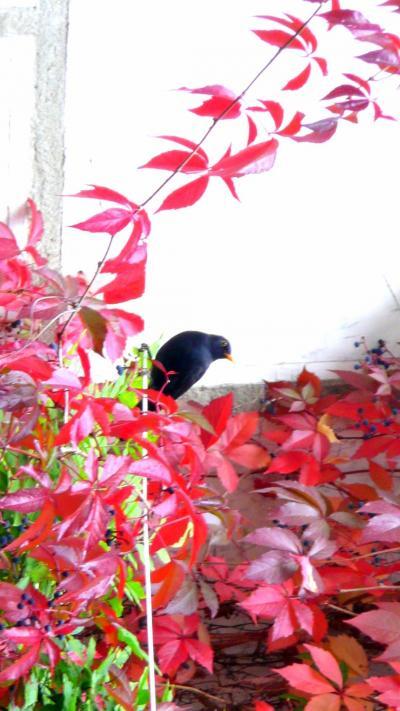 40?エゴン・シーレ文化センターのカフェの紅葉 in チェスキークルムロフ