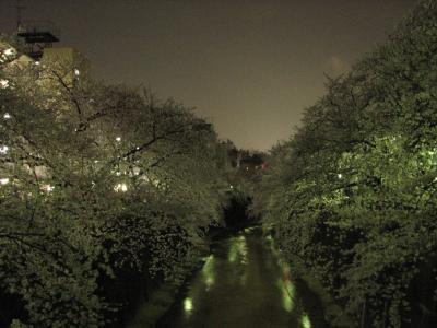 2008春 石神井川散策