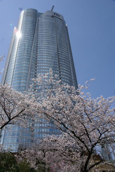 六本木ヒルズの足元 毛利庭園の桜
