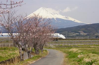 2008桜日記 第4弾  新幹線と富士山と桜&菜の花 編