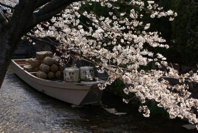 春だ!桜だ!満開だ!2008