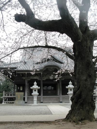 桜輪行-4 滝不動・星影神社 ☆近在の桜名所を再認識し