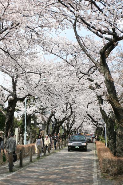 青山霊園にてお花見♪