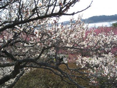 梅の花見  2008