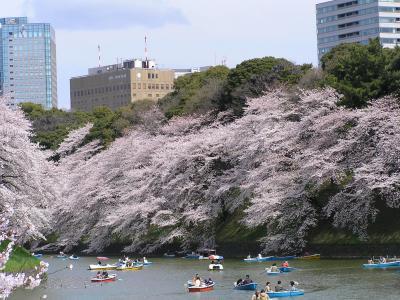 東京桜散策~半蔵門から飯田橋へ~千鳥ヶ淵緑道