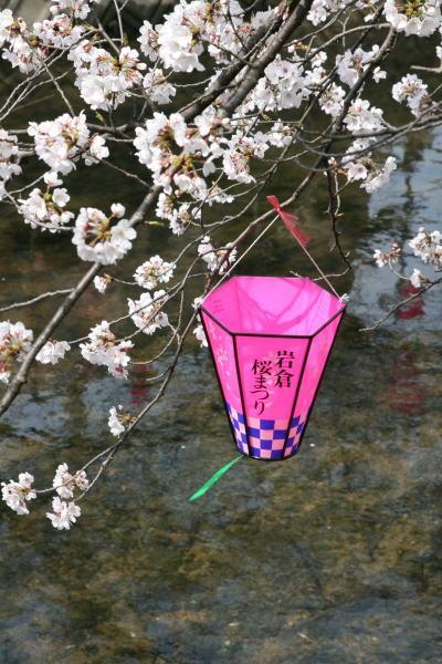 小さな旅●岩倉・五条川のさくら