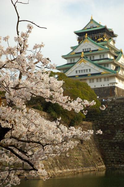 満開の大阪城公園の桜