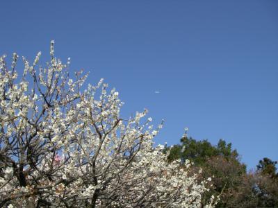 2008春・水戸偕楽園