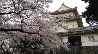 小田原城でお花見