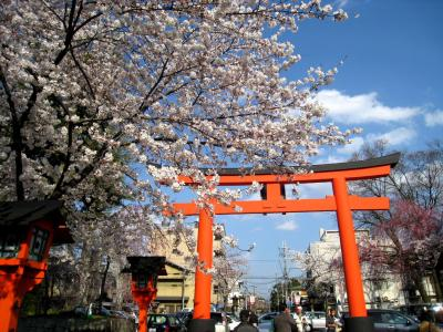 今年も桜咲く京都にやってきました(等持院、平野神社)
