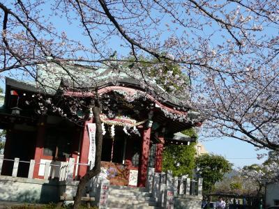 洲崎神社@木場 でお花見