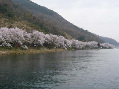 2008桜だより◆海津大崎の花見クルーズ(滋賀県高島市マキノ町)