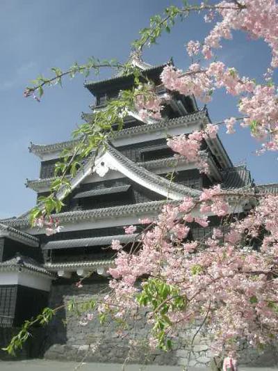 熊本城の桜に間に合いました