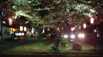 ライトアップの大宮桜並木・・・飯田市
