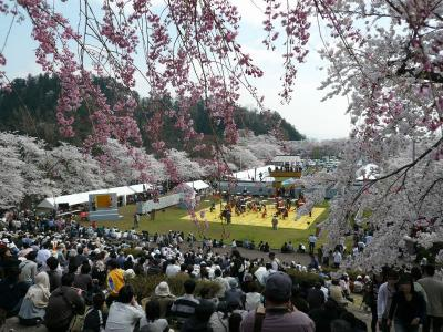 桜満開の天童「人間将棋」