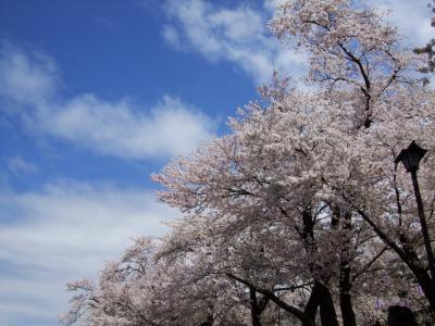 臥竜公園でお花見&カンガルーのハッチ