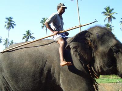 スリランカ人の友達とキャンディ観光