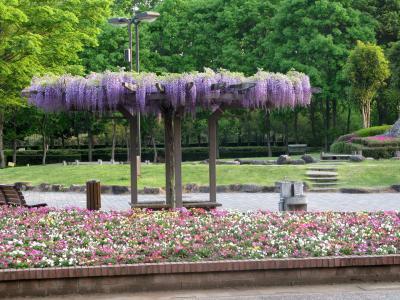 【近郊2】江南町への出張-農林公園