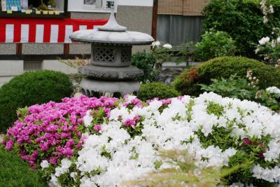 2008春、藤の花咲く曼荼羅寺(5)