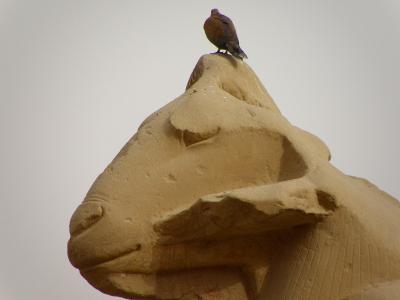★★GWエジプト周遊その3★4日目:ルクソール東岸→アスワン