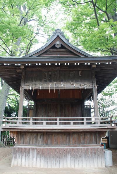 越谷久伊豆神社の藤色