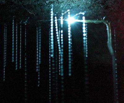 ニュージーランドの旅?スペルバウンド洞窟探検でツチボタルを見る