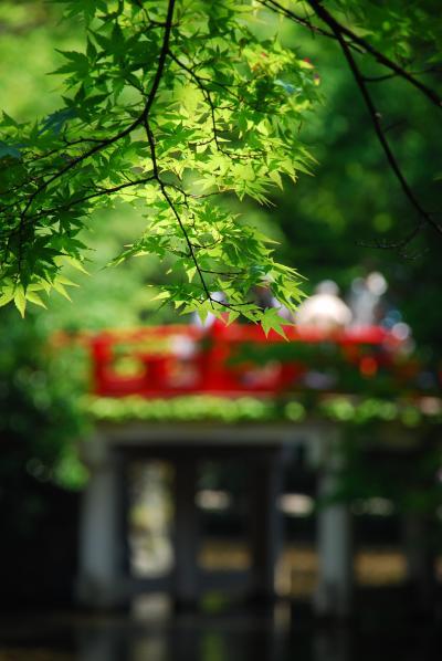 武蔵一宮氷川神社の木漏れ日の下で