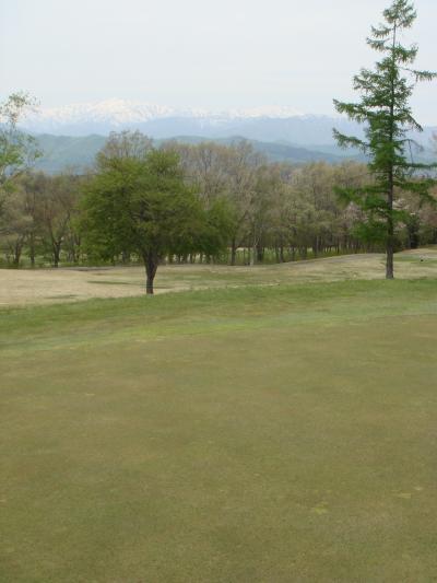 ひるがの高原は、新緑で萌え~!