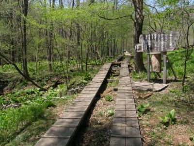 5月6日 春を求めて上州路 その4 草津ザゼンソウ公園