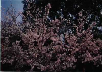 春を探しに東京巡り
