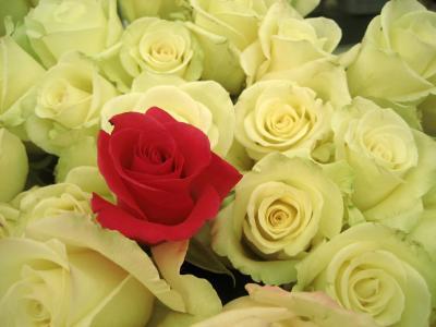 3度目の国際バラとガーデニングショウ(2)ショウならではの切り花特集@